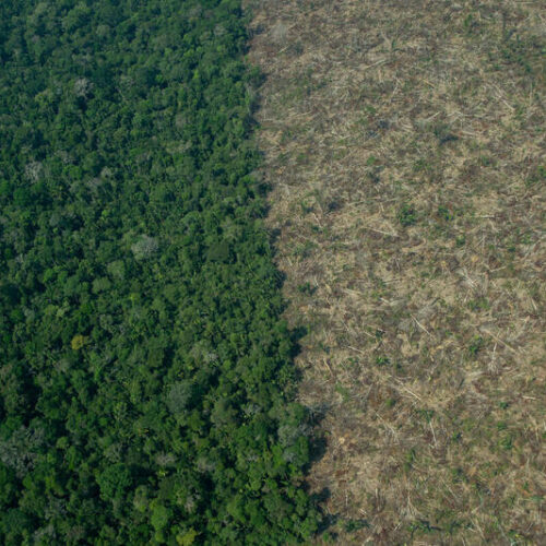 Amazônia registra desmatamento recorde sob governo Bolsonaro