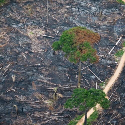 Maior banco da França deixará de financiar empresas ligadas ao desmatamento na Amazônia